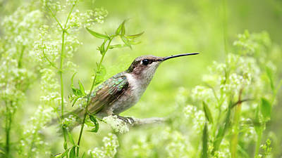 Photograph - Hummingbird Hiding In Flowers by Christina Rollo
