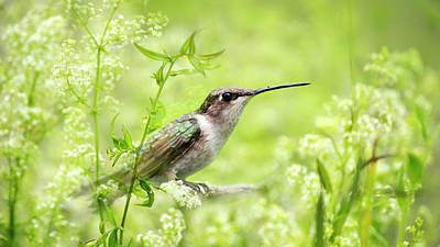 Hummingbird Hiding In Flowers Art Print by Christina Rollo