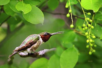 Hummingbird Hiding In Tree Art Print by Christina Rollo