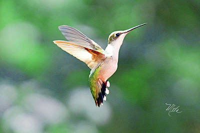 Print featuring the photograph Hummingbird Hovering by Meta Gatschenberger