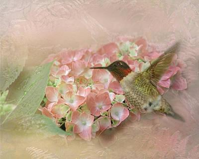 Photograph - Hummingbird Hydrangea by TnBackroadsPhotos