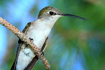 Photograph - Hummingbird I by Paul Marto