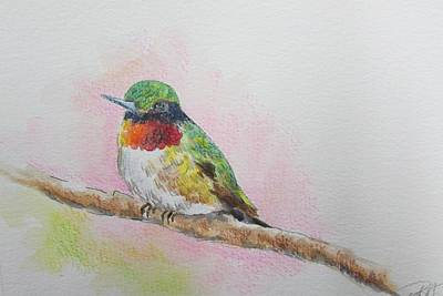 Painting - Hummingbird II by Gloria Turner