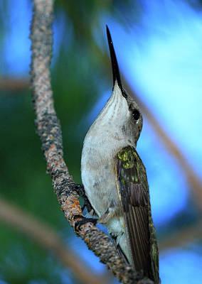 Photograph - Hummingbird II by Paul Marto
