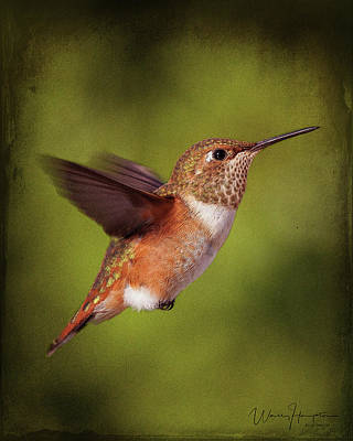 Photograph - Rufous Hummingbird - 0615,st by Wally Hampton