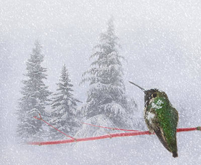 Photograph - Hummingbird In A Winter Wonderland by Angie Vogel