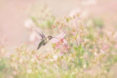 Photograph - Hummingbird In Anemone Garden Springtime by Susan Gary