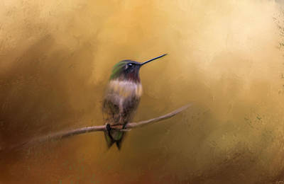 Hummingbird In Autumn Print by Jai Johnson