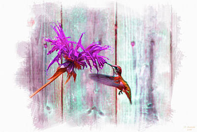 Vintage Pink Cadillac - Hummingbird in Color by David Stasiak