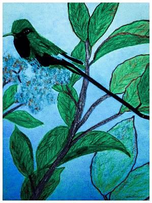 Evening Scenes Drawing - Hummingbird In Evening by Debra Lynch