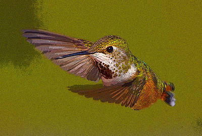 Abstract Hummingbird Photograph - Hummingbird In Flight- Abstract by Tim Grams