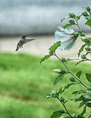 Photograph - Hummingbird In Flight by Yvonne Emerson AKA RavenSoul