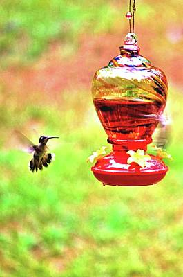 Photograph - Hummingbird In July by James Potts
