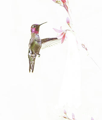 Photograph - Hummingbird In Pastel  by Ruth Jolly