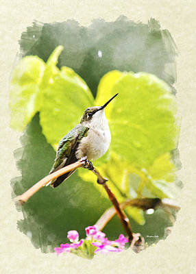 Mixed Media - Hummingbird In Rain Blank Note Card by Christina Rollo