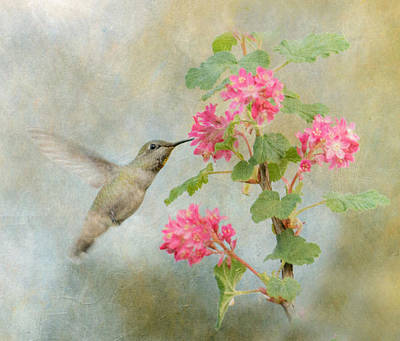 Photograph - Hummingbird In Spring by Angie Vogel
