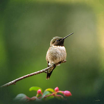 Hummingbird In The Garden Print by Jai Johnson