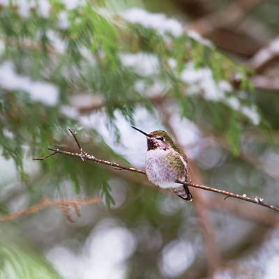 Photograph - Hummingbird In Winter by Peggy Collins