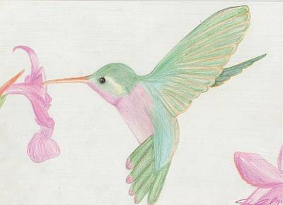 Orchid Drawing - Hummingbird by Joanna Aud