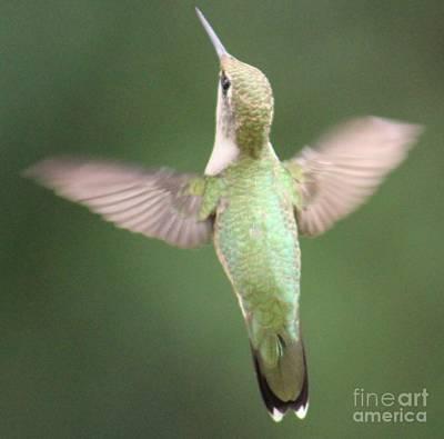 Photograph - Hummingbird by Julie Kindt