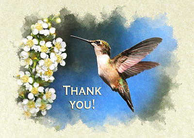 Photograph - Hummingbird Just Looking Thank You Card by Christina Rollo