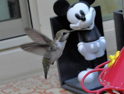 Photograph - Hummingbird Kisses Mickey by Jay Milo
