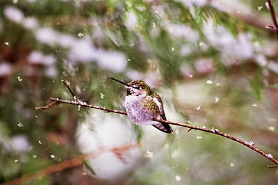Photograph - Hummingbird - Let It Snow  by Peggy Collins