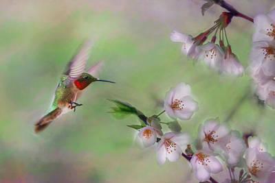 Weeping Mixed Media - Hummingbird by Lori Deiter