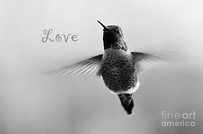 Photograph - Hummingbird Love Black And White by Debby Pueschel