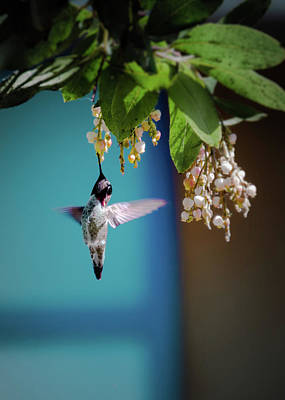 Photograph - Hummingbird Moment by Mark Dunton