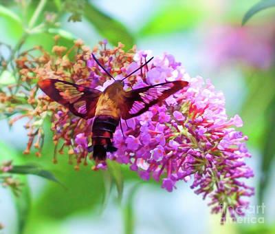 Photograph - Hummingbird Moth And Summer Colors by Kerri Farley