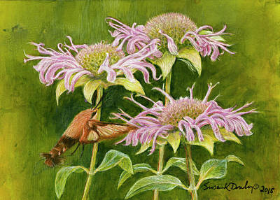 Drawing - Hummingbird Moth At Wild Bergamot by Susan Donley
