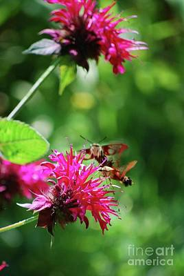 Art Print featuring the photograph Hummingbird Moth by Lila Fisher-Wenzel