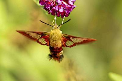 Fuzzy Digital Art - Hummingbird Moth On Butterfly Bush by Geraldine Scull