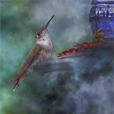 Birds Rights Managed Images - Hummingbird Mystic Mist Royalty-Free Image by Betsy Knapp