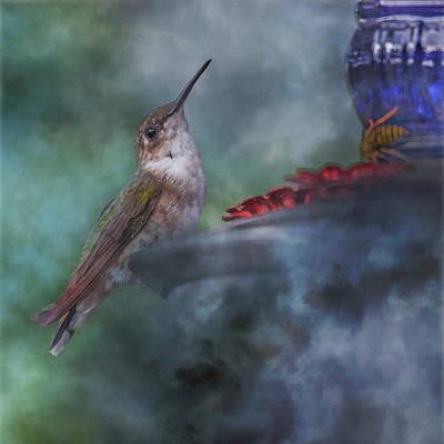 Hover Wall Art - Photograph - Hummingbird Mystic Mist by Betsy Knapp