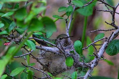 Photograph - Hummingbird Nest 1 by Kathryn Meyer