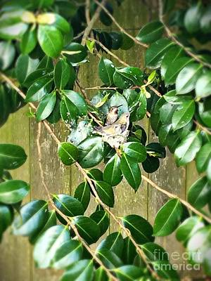 Photograph - Hummingbird Nest by Vennie Kocsis