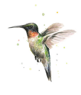 Bird Watercolor Painting - Hummingbird by Olga Shvartsur