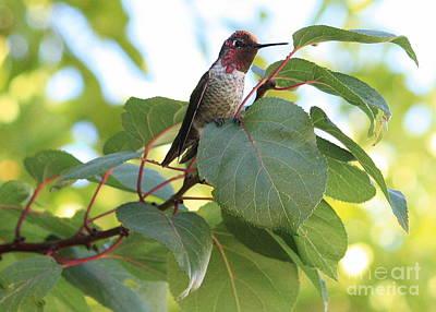 Photograph - Hummingbird On Leaf by Carol Groenen