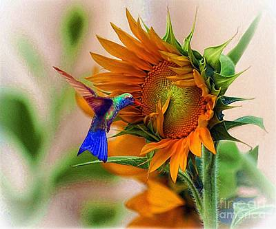 Hummingbird On Sunflower Art Print by John  Kolenberg