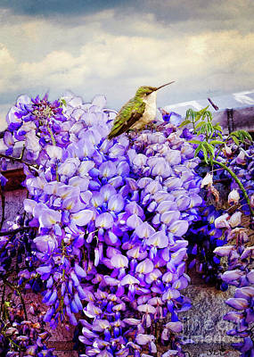 Photograph - Hummingbird On The Watch by Sandra Clark