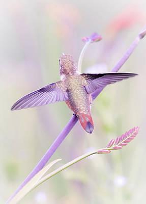 Photograph - Hummingbird Paradise by Athena Mckinzie