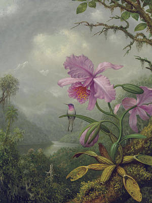 Pink Flower Branch Painting - Hummingbird Perched On An Orchid Plant by Martin Johnson Heade