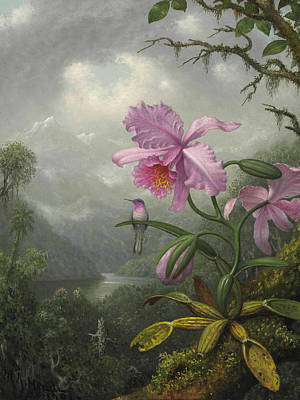 Orchid Art Painting - Hummingbird Perched On The Orchid Plant by Martin Johnson Heade