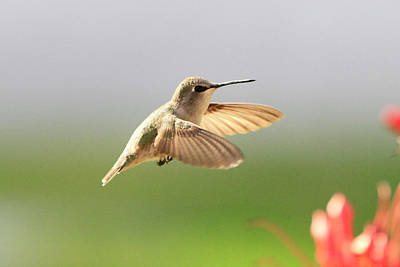Food And Flowers Still Life Rights Managed Images - Hummingbird Profile Royalty-Free Image by Shoal Hollingsworth
