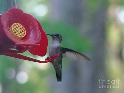 Art Print featuring the photograph Hummingbird  by Rand Herron