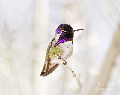 Photograph - Hummingbird by Rebecca Margraf