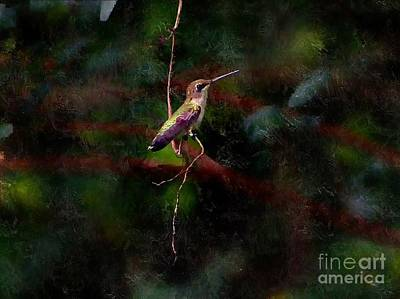 Photograph - Hummingbird Resting by Paul Wilford