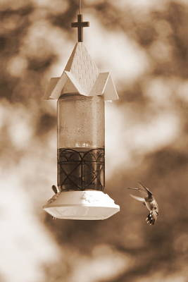 Photograph - Hummingbird - Sepia by Beth Vincent